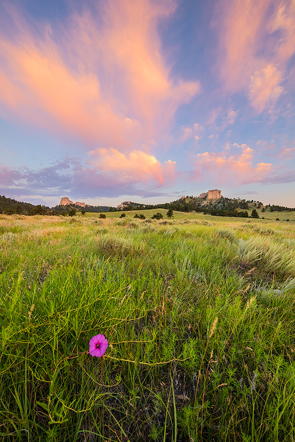 A Nebraska scenic landscape photograph of Fort Robinson State Park at sunrise with flowers and clouds. - Nebraska Photography