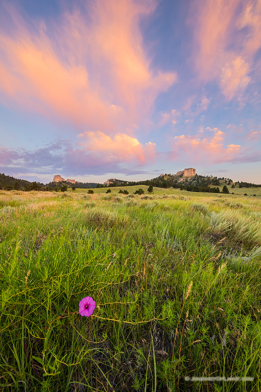 A Nebraska scenic landscape photograph of Fort Robinson State Park at sunrise with flowers and clouds. - Nebraska Picture