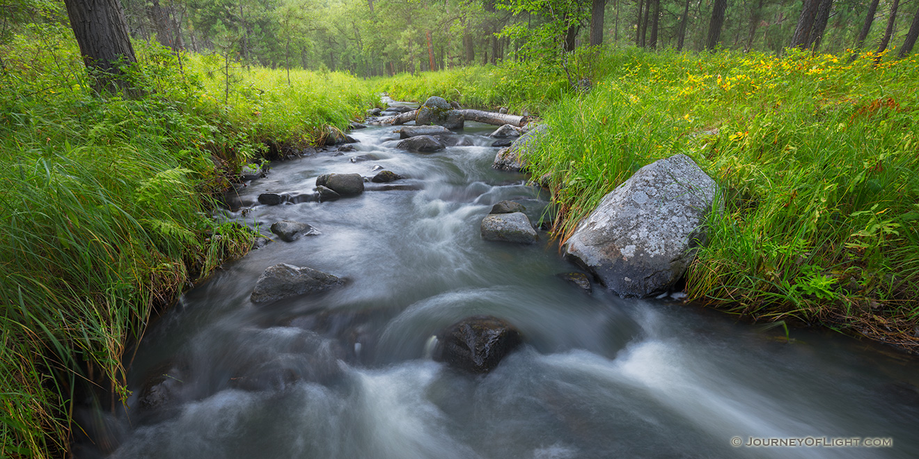 A panoramic scenic photograph of Grace Coolidge Stream through the forest in Custer State Park, South Dakota. - South Dakota Picture